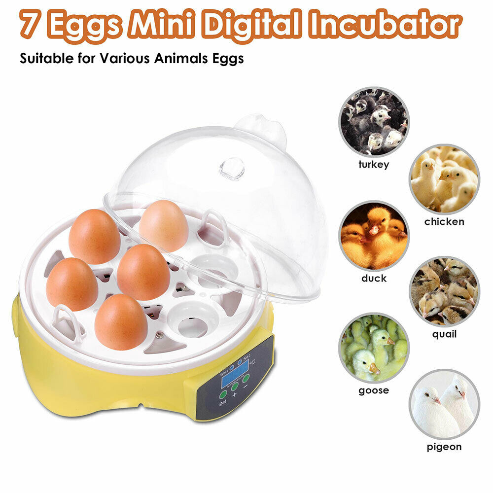 From Midnight To Duck Egg See: Digital Clear 7 Egg Mini Incubator Chicken Duck Bird