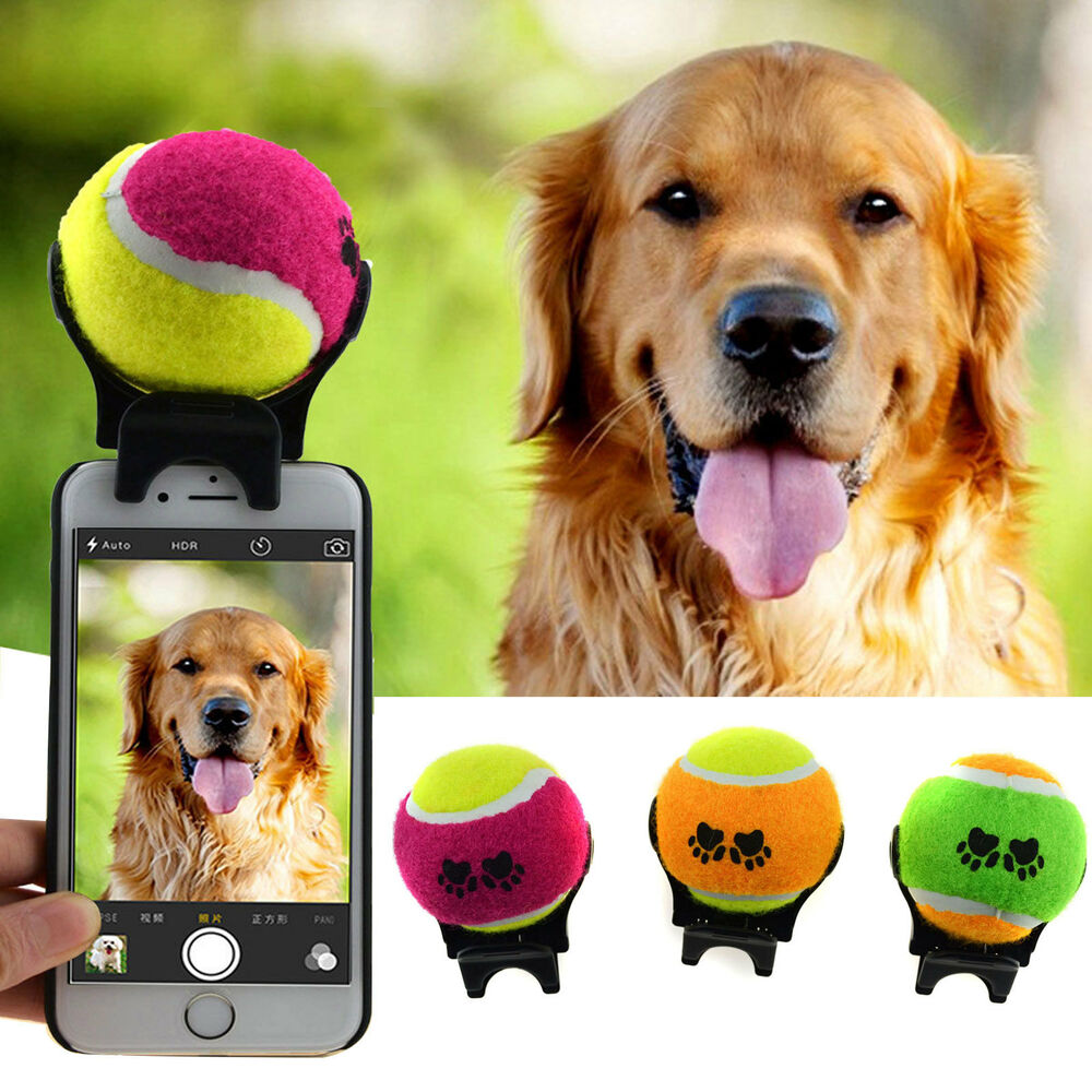 pet selfie stick ball phone attachment for dog cat training orange green purple ebay. Black Bedroom Furniture Sets. Home Design Ideas