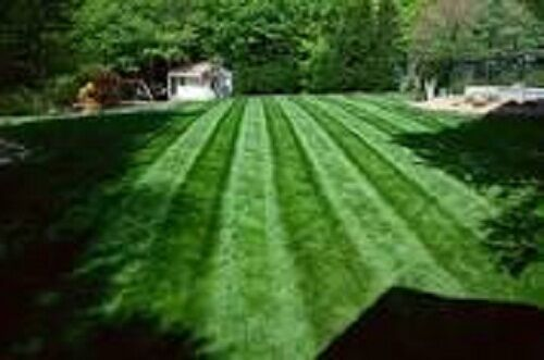 New Falcon Iv Turf Type Fescue Grass Seed Sun Or Shade 1