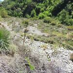 PLACER MINING CLAIM TRABUCO CANYON ORANGE COUNTY SO CAL GOLD SILVER ORE MINE