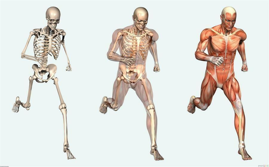 Full Human Body Anatomy Diagram Structure Throughout Poster 40x27