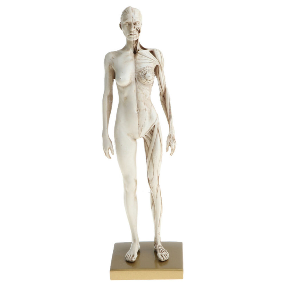 11 Inch Female Anatomy Figure Model Anatomical Reference For Artists