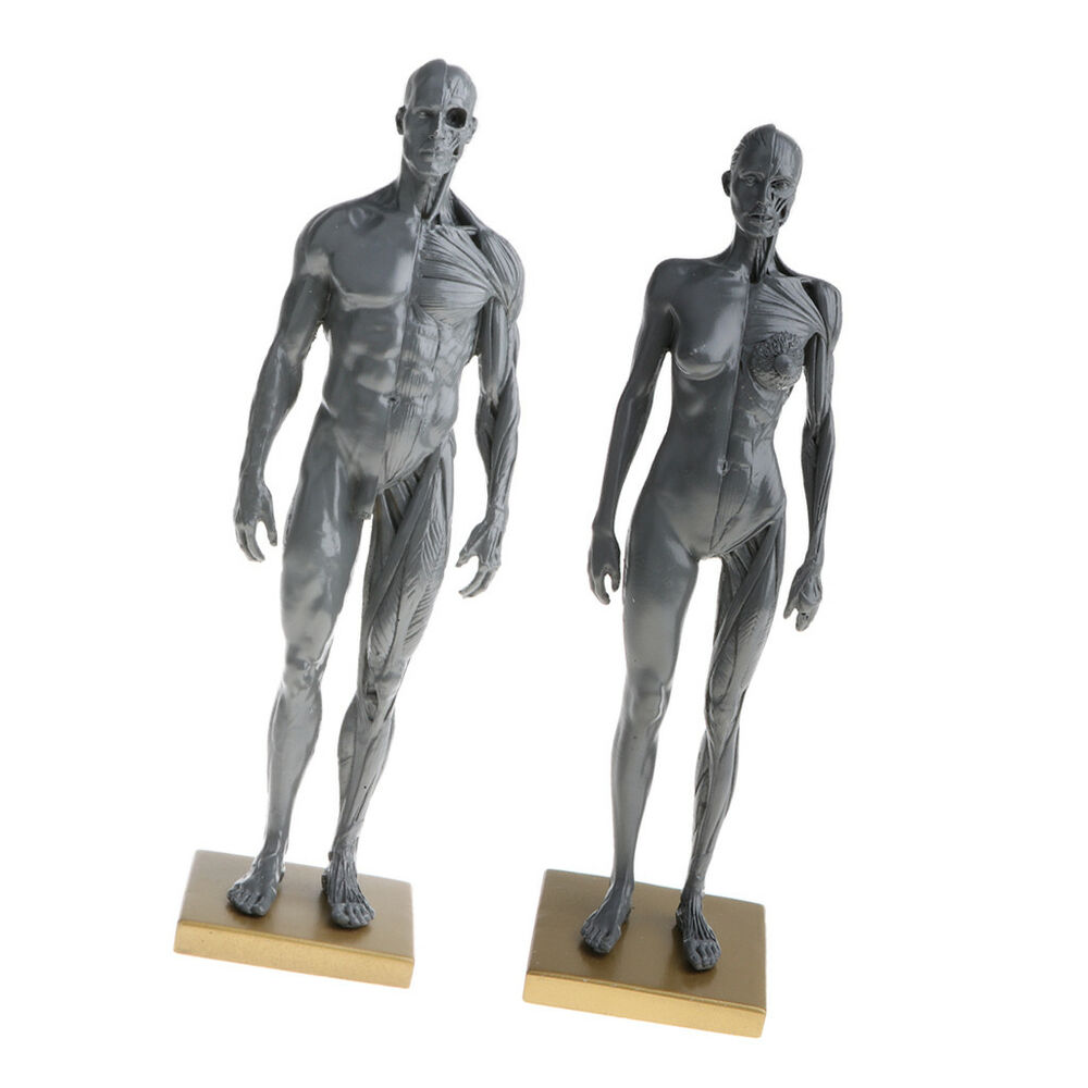 11 Gray Female Male Anatomy Figure Model Anatomical Reference For