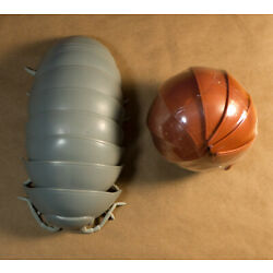 Kyпить Bandai Dango Mushi Pill Bug Lot of 2 Dark Gray and Brown на еВаy.соm