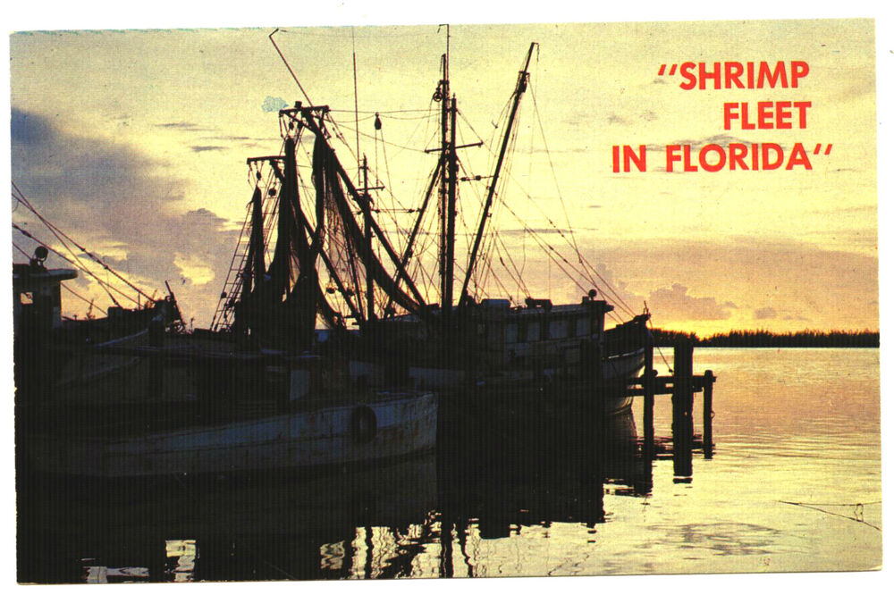 Ebay Boats Florida >> SHRIMP FLEET IN FLORIDA. FL. AT SUNSET. SHRIMP BOATS. | eBay