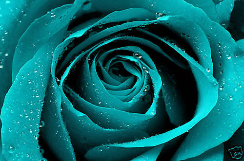 Turquoise Rose Canvas Art Floral Box Wall Picture A1 Ebay