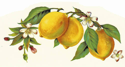 how to grow a lemon tree from a branch