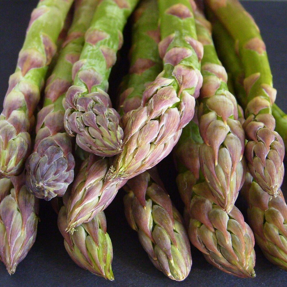 how to grow asparagus from seed uk