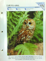TAWNY OWL N.1-Group 2-Birds-Wildlife FACT FILE Card