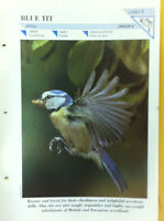BLUE TIT N.5-Group 2-Birds-Wildlife FACT FILE Card