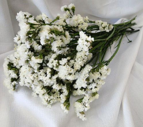 White statice flower natural preserved white sinuata english statice flowers mightylinksfo