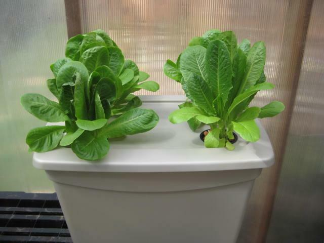 Hydroponic Deep Water Culture Dwc System Kit With