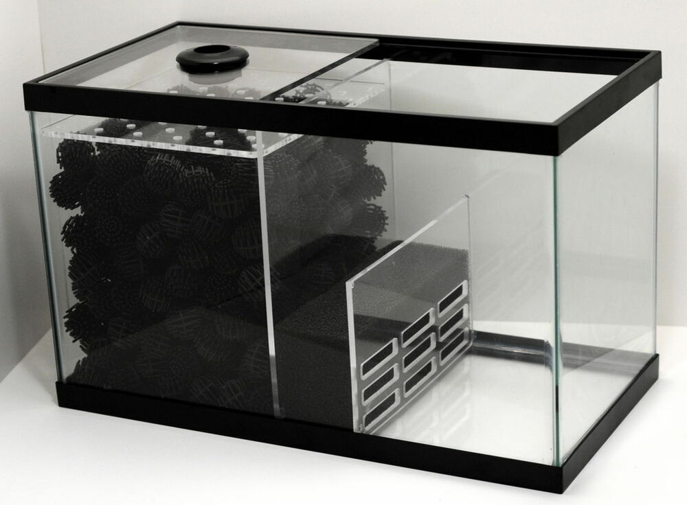 Wet dry sump kit for 20 x 10 x 12 10 gal protein for Kit aquarium