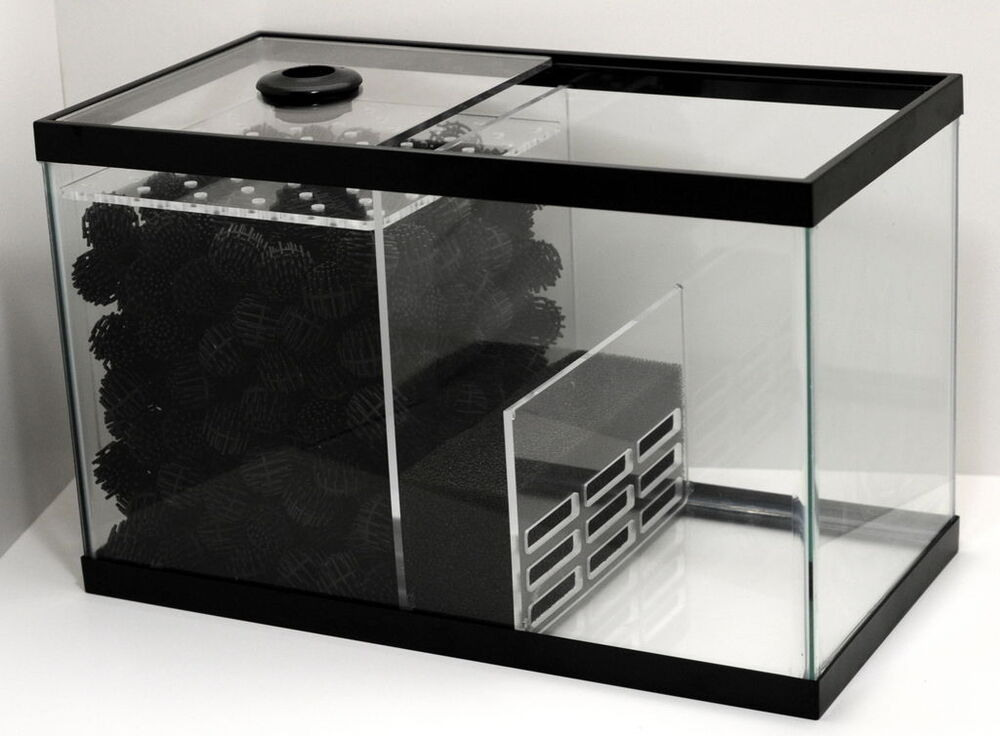 Wet dry sump kit for 20 x 10 x 12 10 gal protein for Filtration aquarium