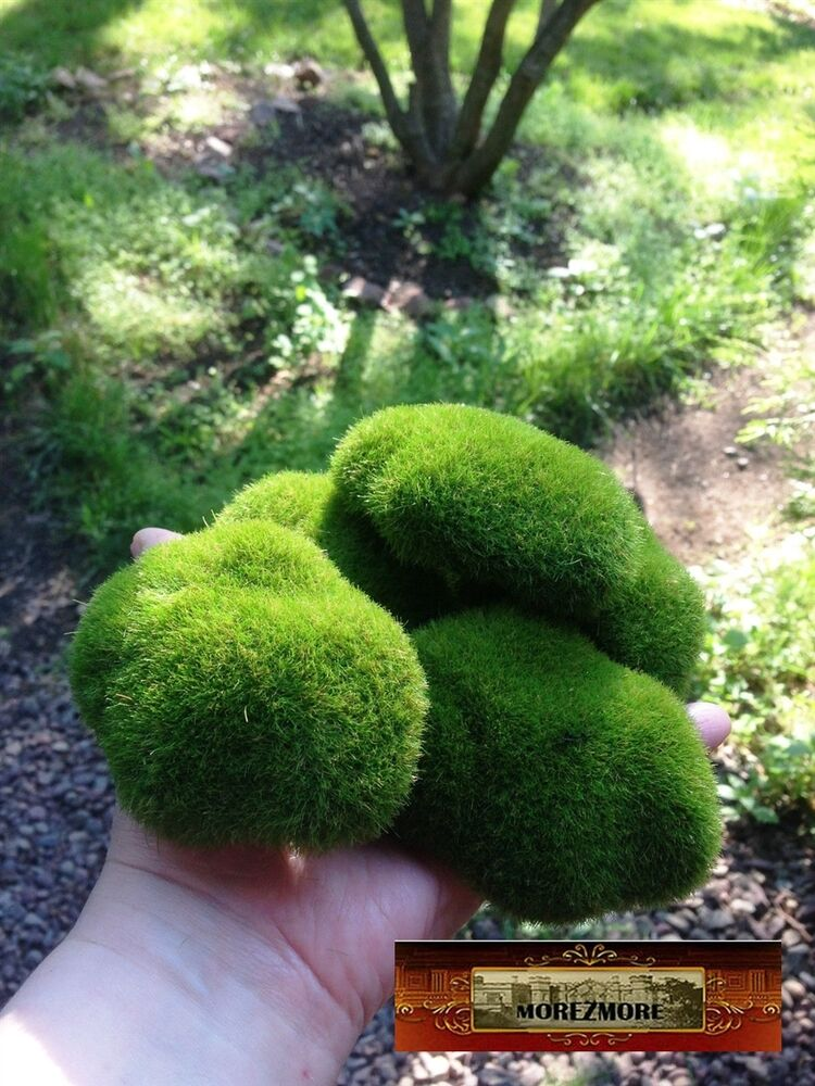 M00024 Morezmore 5 Artificial Fake Faux Emulation Moss Fuzzy Stones Balls T20 Ebay