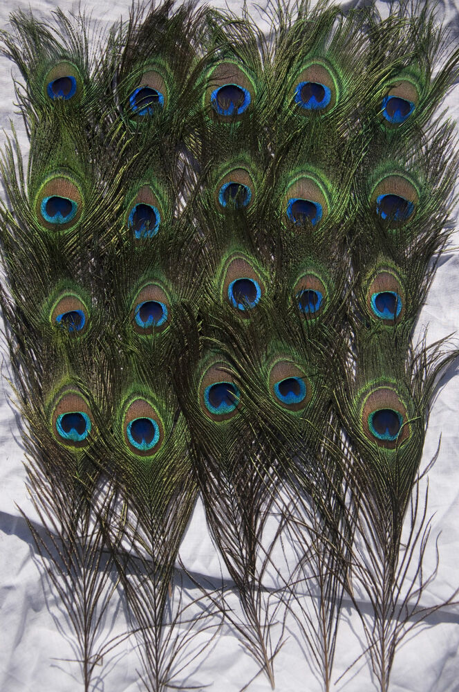 Peacock tail feathers natural 10 12inch long for bouqet for Where can i buy feathers for crafts