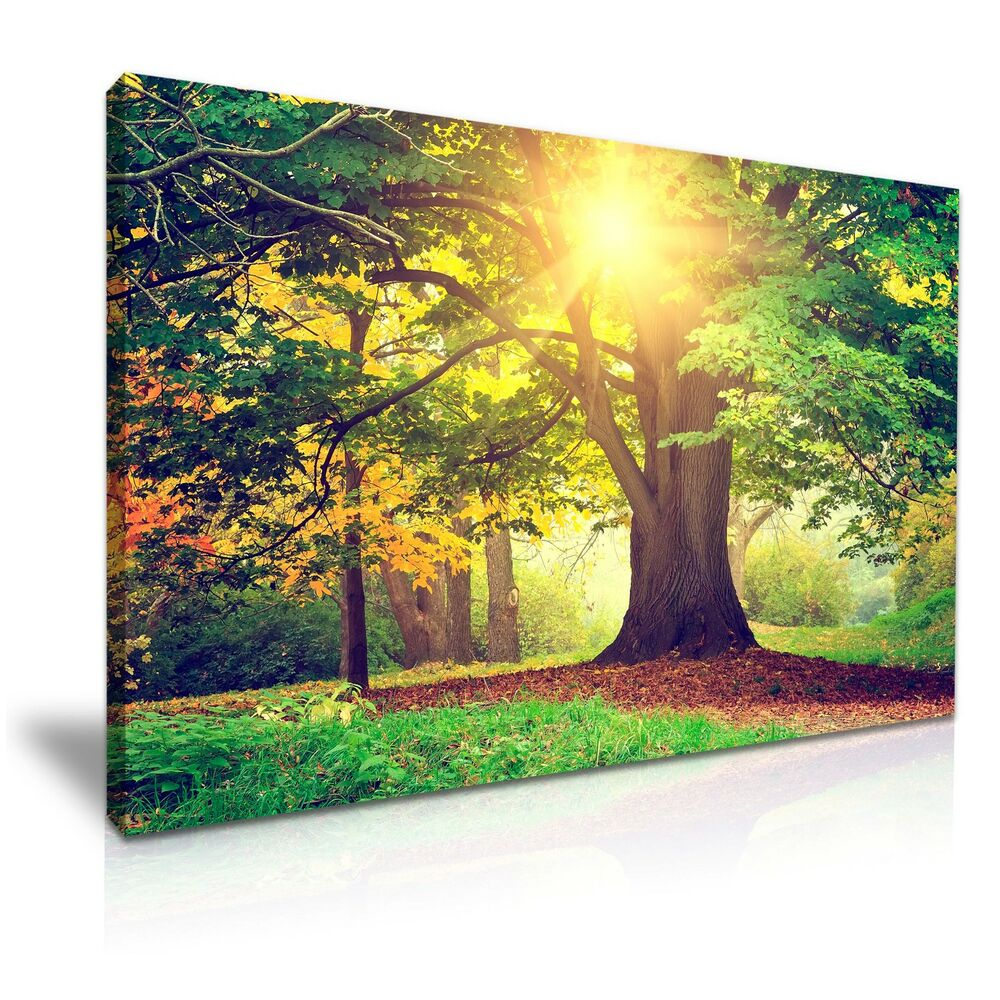Large Forest Tree Sunshine Canvas Wall Art Picture Print