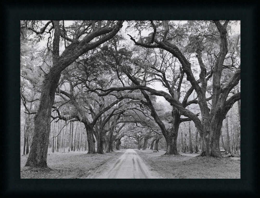 Oak arches by jim black white photography framed art print for Black and white wall art