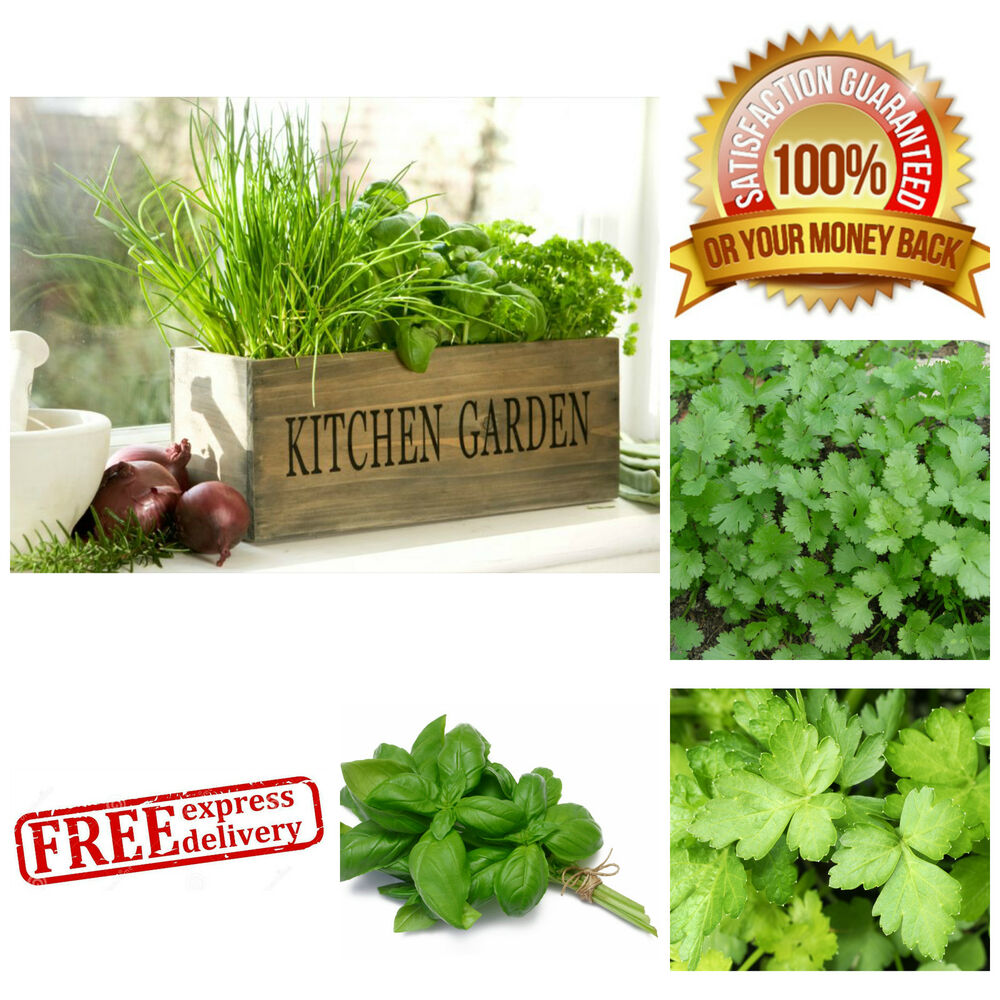 Kitchen Window Herb Planter: INDOOR HERB KIT Garden Kitchen Window Wooden Box Pots