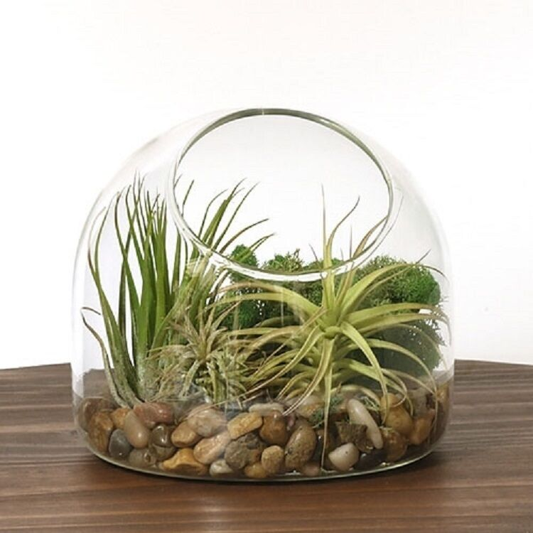 house plants air plant terrarium bowl diy kit home office gift setting plant ebay. Black Bedroom Furniture Sets. Home Design Ideas