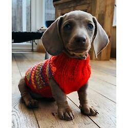 9'' Hand Knitted Miniature Dachshund. Daxie. Doxie. Tiny Puppy Jumpers / Coats.