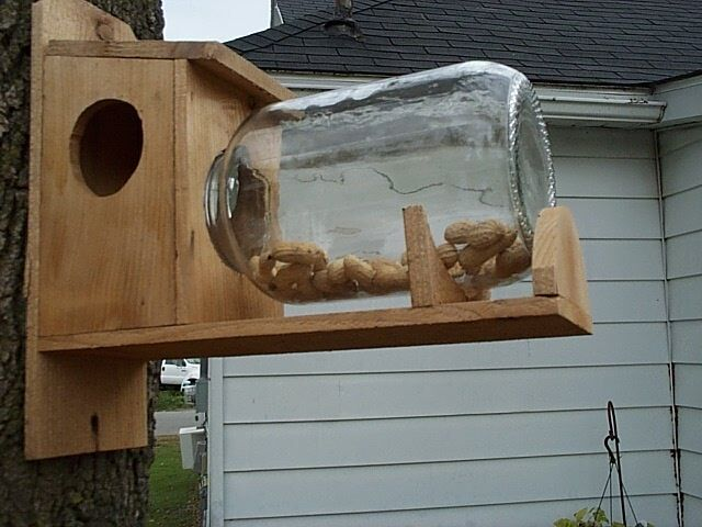 Handmade Cedar Squirrel Feeder With Gallon Jar Ebay