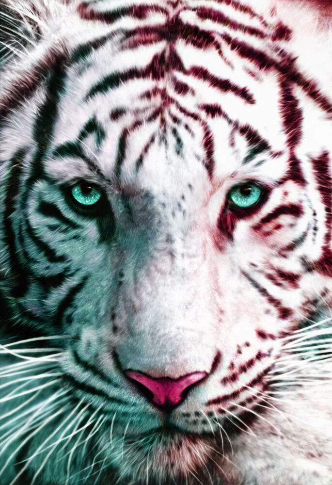 Fantasy white tiger - photo#14
