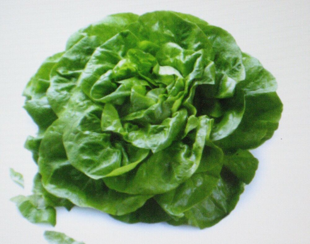 how to grow butter lettuce indoors