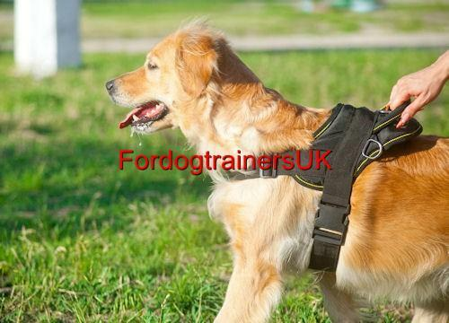 dogs similar to golden retriever new dog harness for golden retriever and similar medium 628