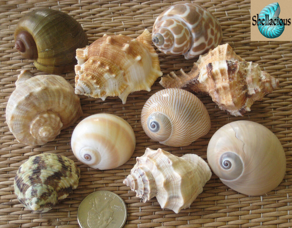 how to force a hermit crab to change shells