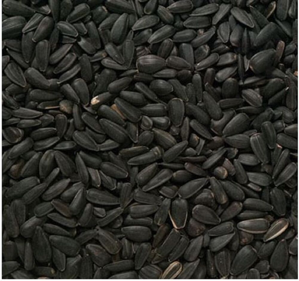oil seeds information Learn more about black seed uses, effectiveness, possible side effects,  interactions,  ajenuz, aranuel, baraka, black cumin, black cumin seed oil ,  black  by acting as an antihistamine, but there isn't enough information in  humans yet.