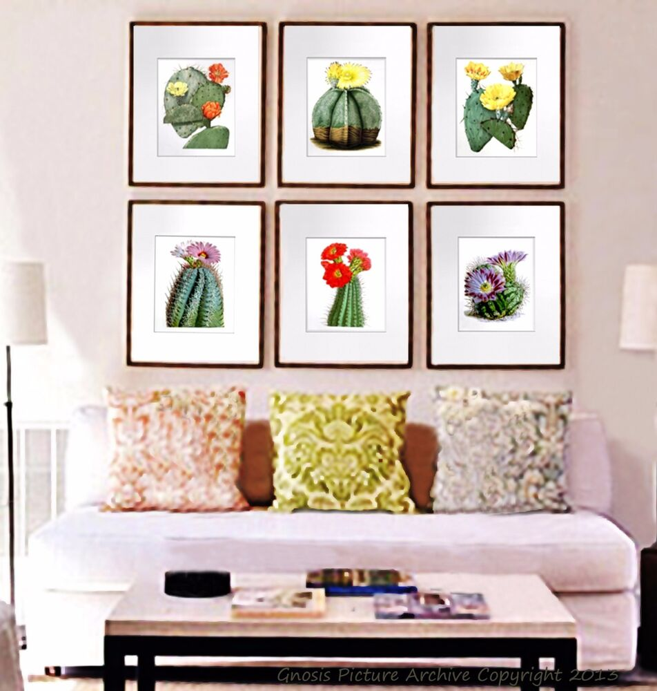 Vintage botanical art set of 6 prints flowering cactus for Art wall decoration