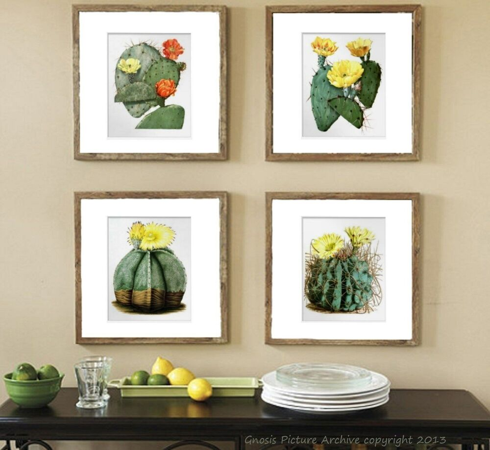 Prints For Wall Decor : Vintage botanical art set of prints flowering cactus