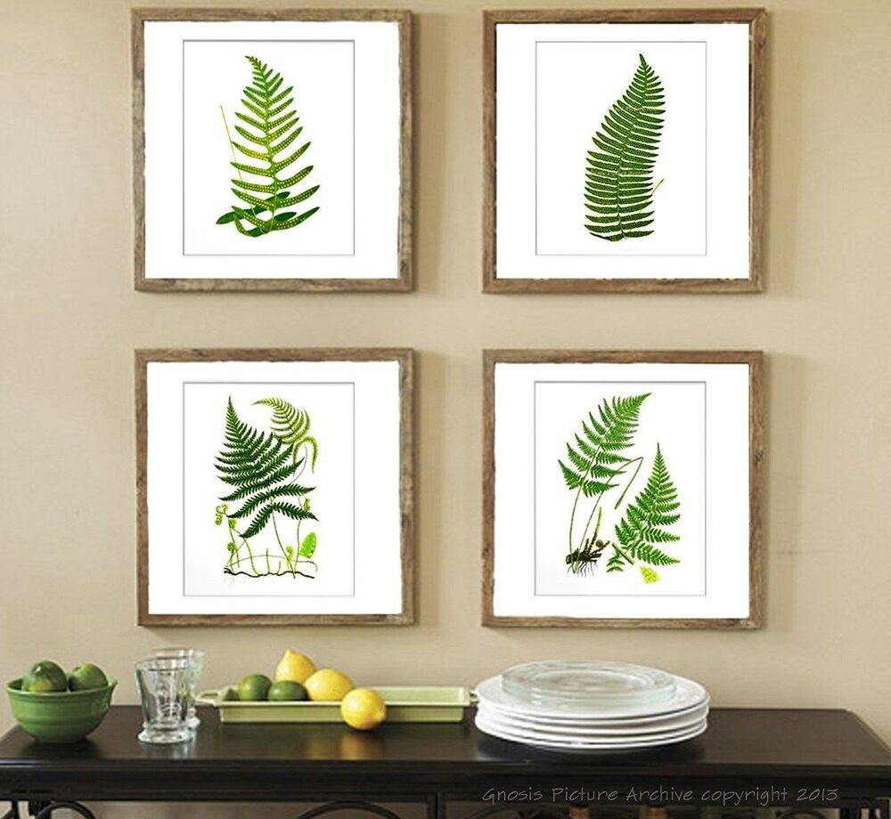 botanical fern prints green antique botanical art unframed wall art set of 4 ebay. Black Bedroom Furniture Sets. Home Design Ideas