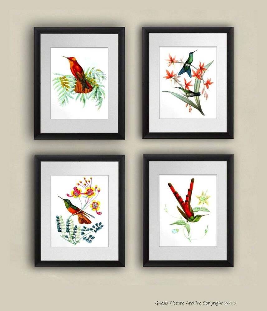 set of 4 vintage hummingbird wall art prints 8x10 wall hanging decor unframed ebay. Black Bedroom Furniture Sets. Home Design Ideas