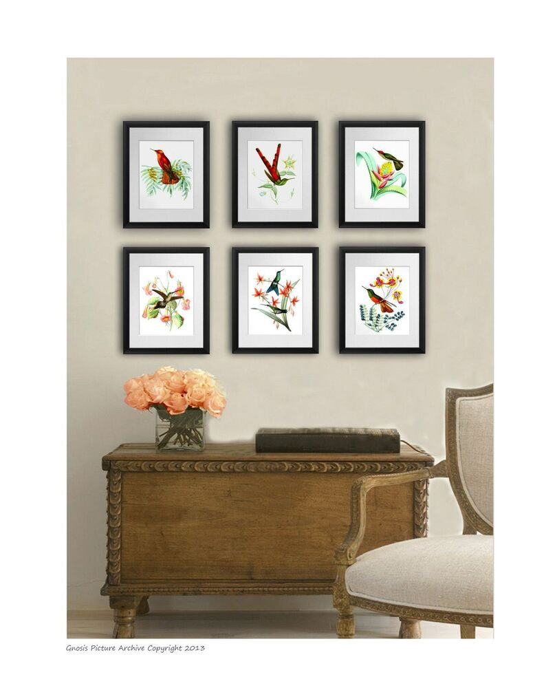 Set of 6 vintage hummingbird art prints antique bird art for Antique wall decor
