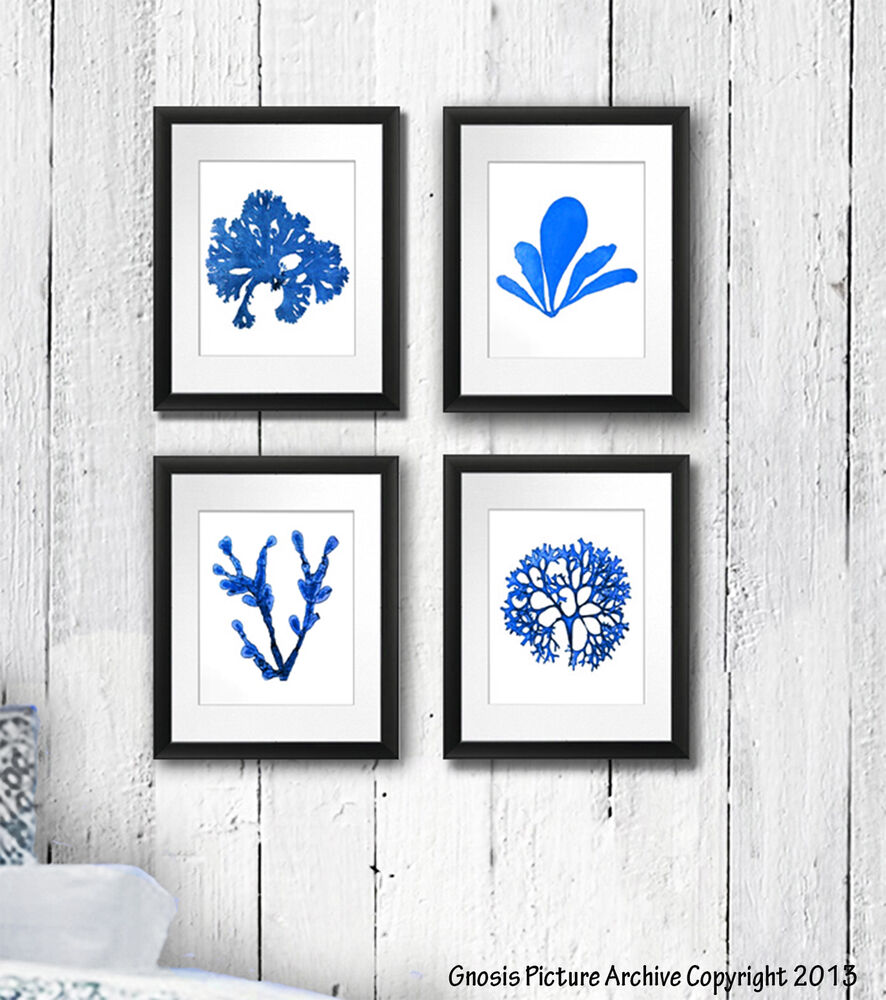set of 4 blue seaweed wall art print nautical beach decor. Black Bedroom Furniture Sets. Home Design Ideas
