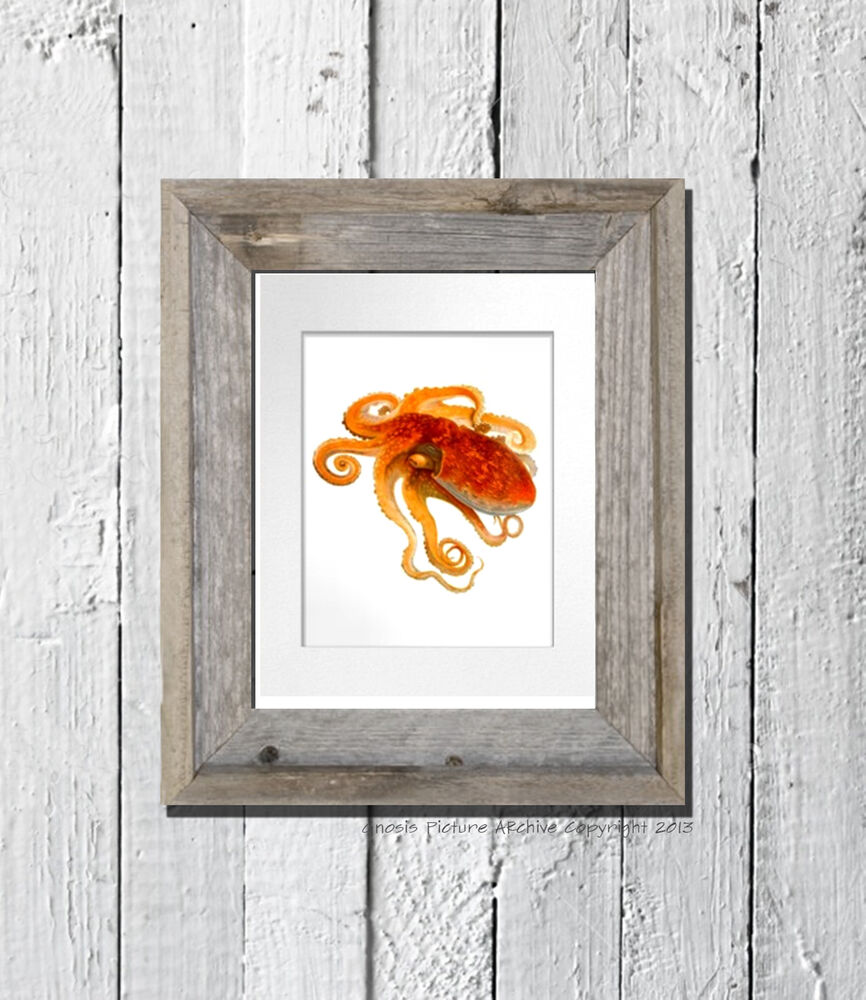 Vintage orange octopus print cephalopod no 8 beach decor for Vintage ocean decor