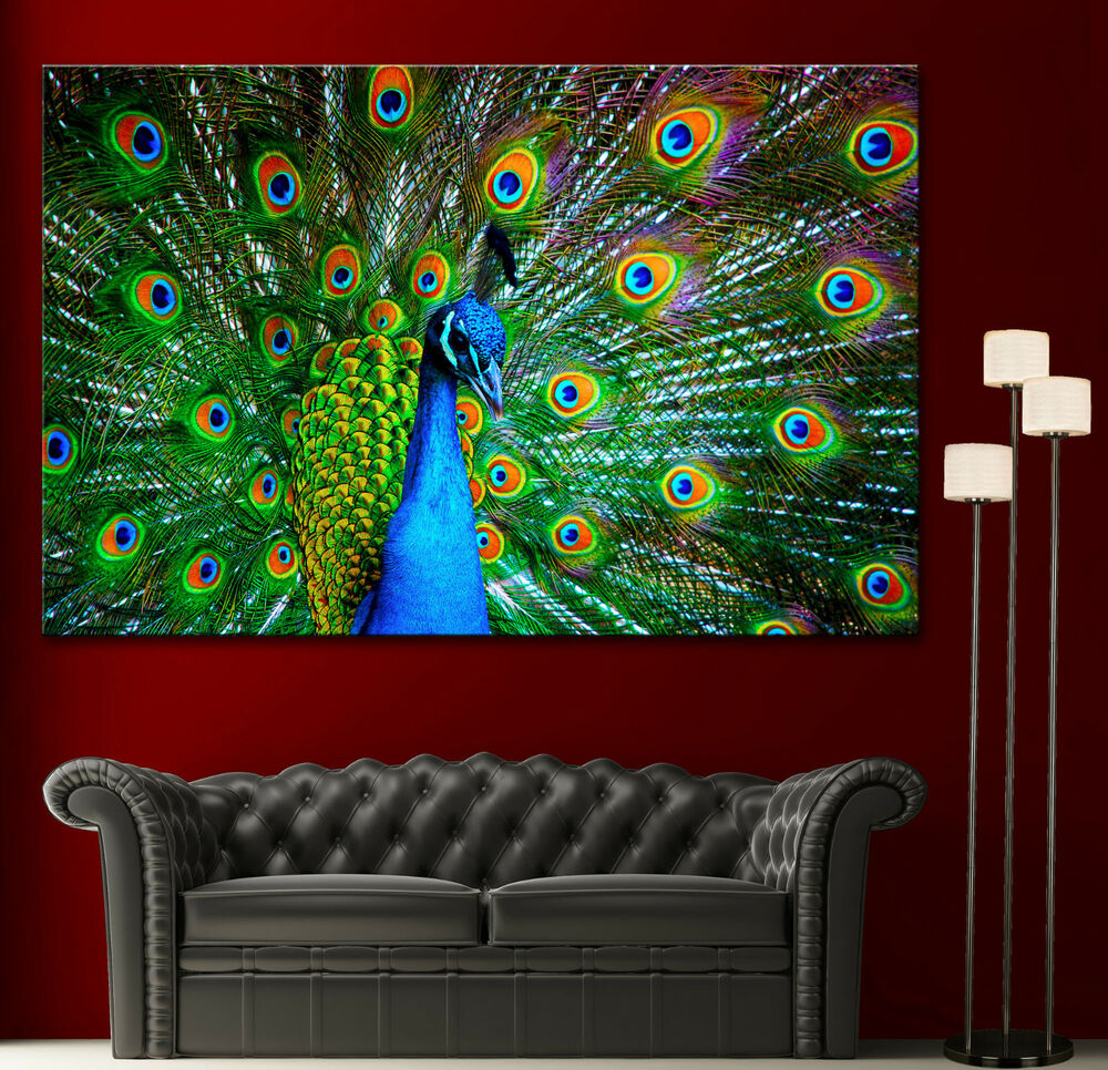 Canvas giclee prints wall art peacock photo colorful print for Buy canvas wall art