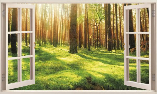 Forest Under Sunshine 3d Window Removable Wall Sticker Art