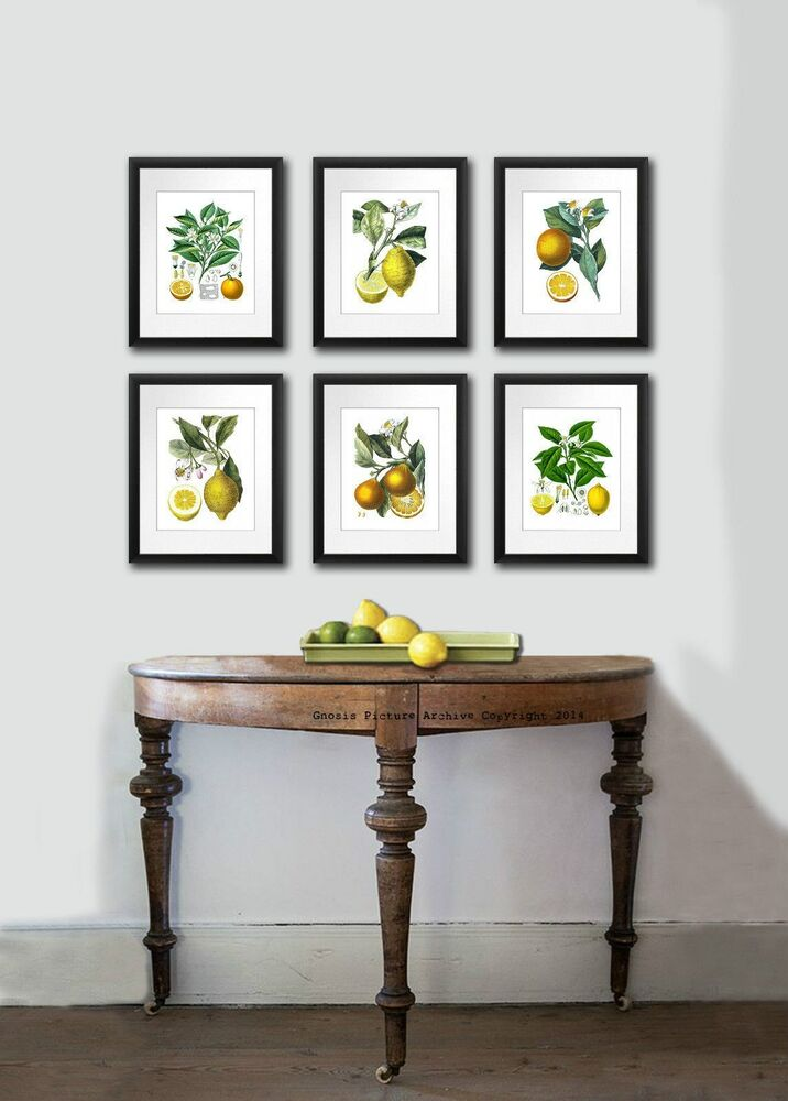 Antique FRUIT PRINT SET OF 6 LEMON ORANGE BOTANICAL Wall ...