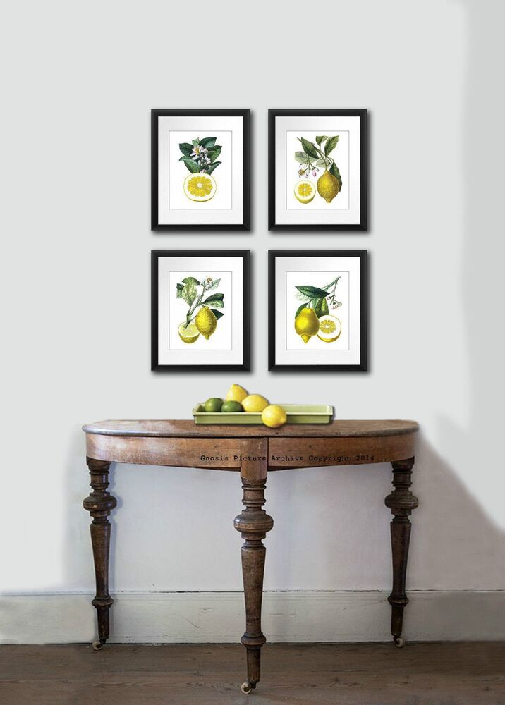 kitchen art decor antique botanical print set of 4 lemons fruits wall hanging ebay. Black Bedroom Furniture Sets. Home Design Ideas