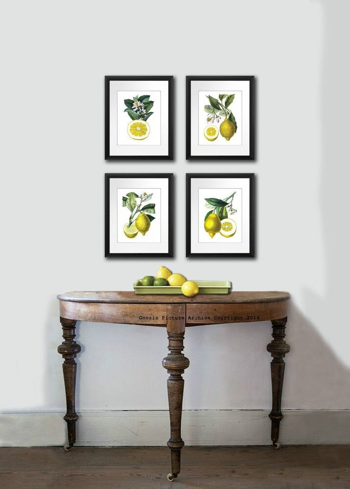 Prints For Wall Decor : Kitchen art decor antique botanical print set of lemons
