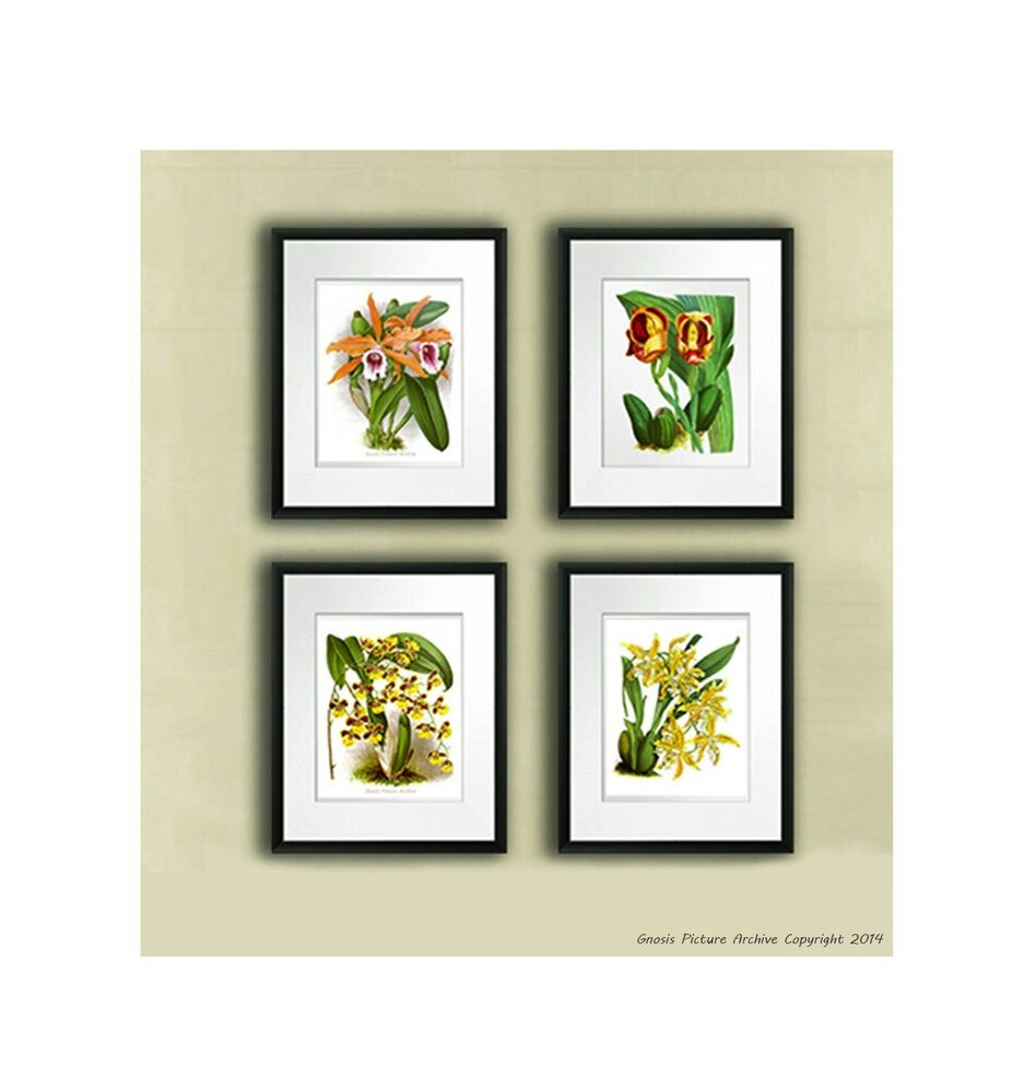 Set Of 4 Yellow Orchid Prints Antique Botanical Book Plate