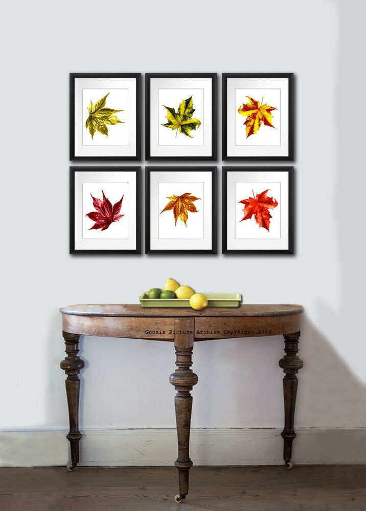 Fall decorations Maple leaf set of 6 Botanical Prints Wall