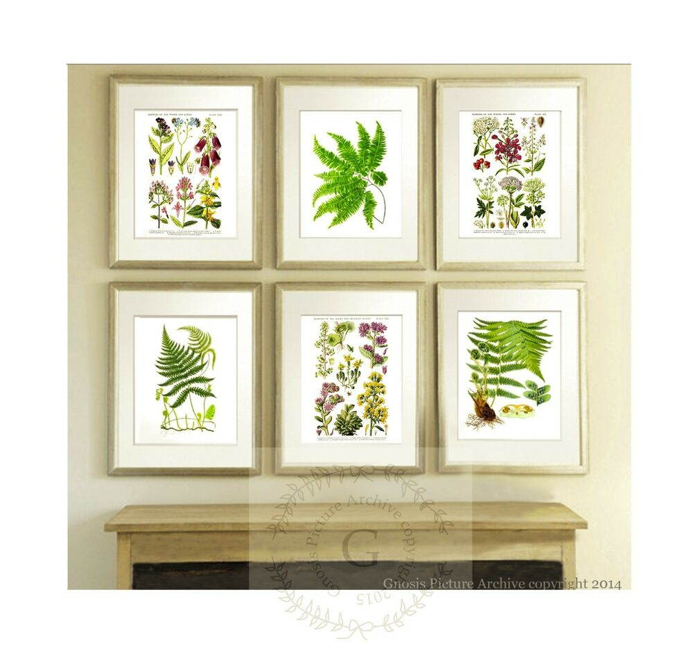 Wild flowers antique fern prints set of 6 botanical wall for Art wall decoration