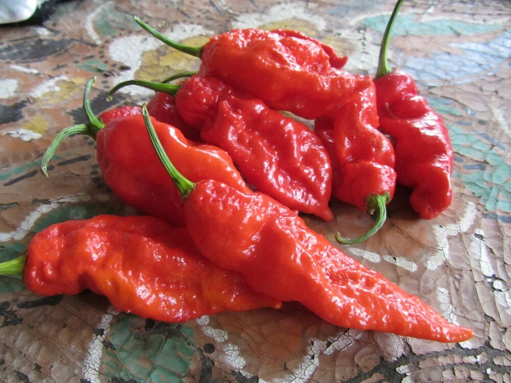 how to use dried habanero peppers