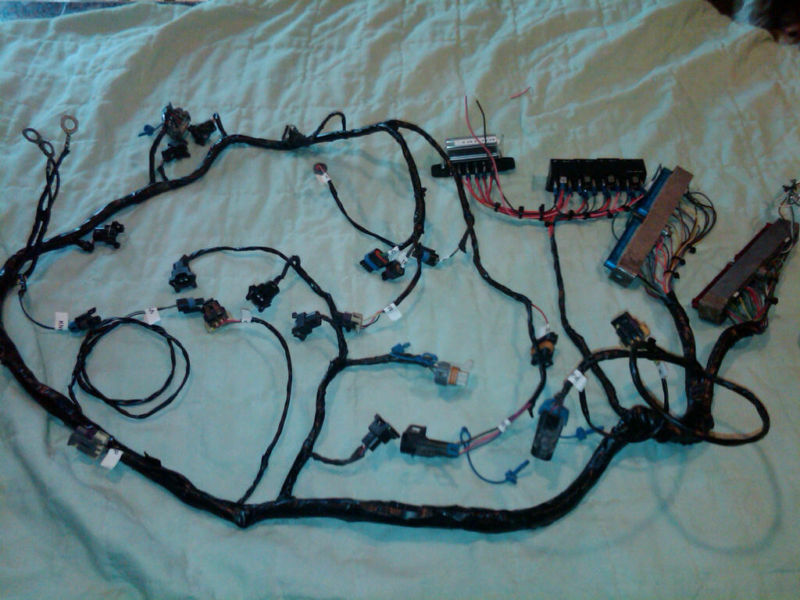 s l1000 wiring harness rewire service ls1 ,ls2, 6 2,6 0,5 7,5 3,4 8,lt1 6.0 Serpentine Belt Diagram at alyssarenee.co