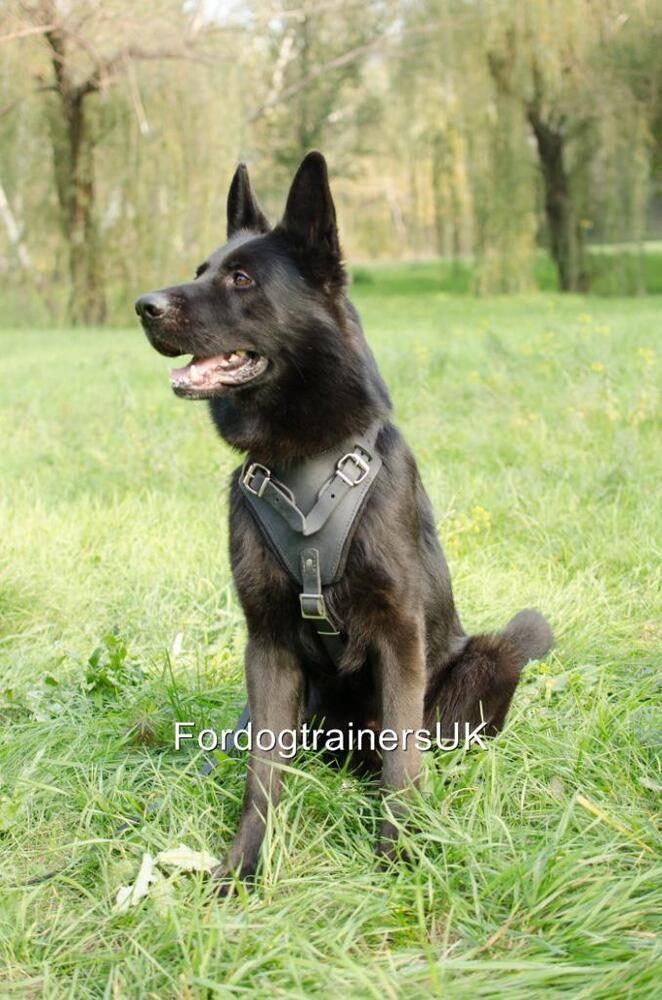 how to train a german shepherd to track