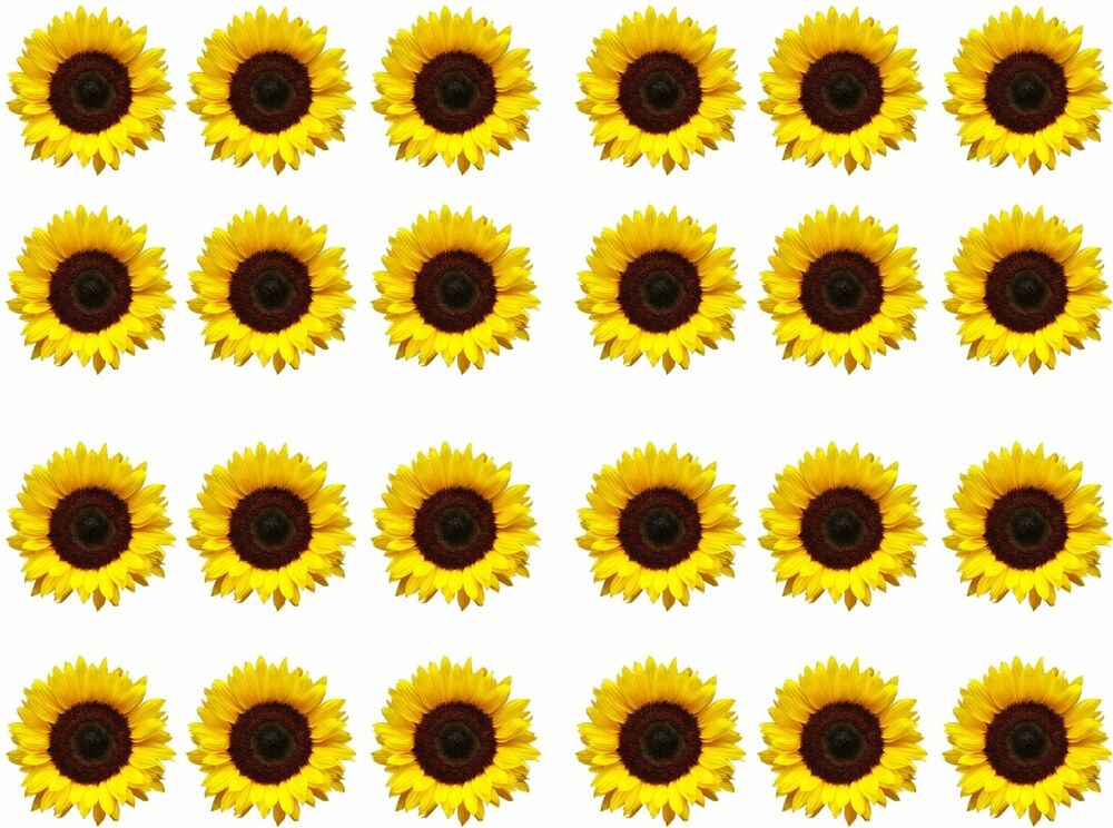 24 x Bright Sunflower Edible Rice Wafer Paper Cupcake ...